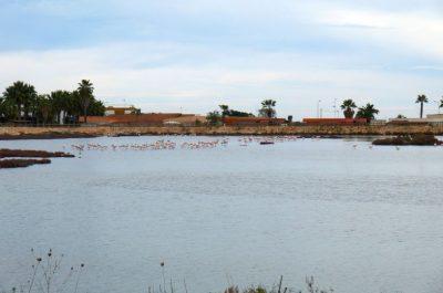 201202-04_Mola Di Bari_001