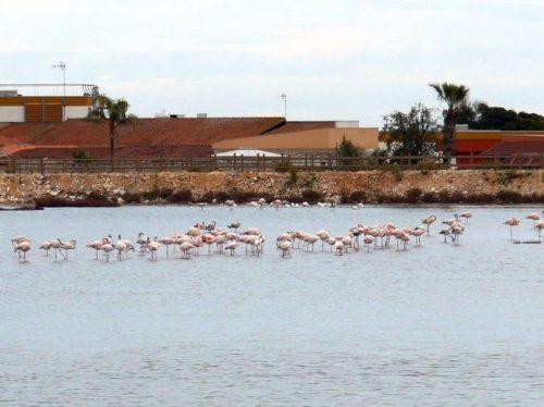 201202-04_Mola Di Bari_002